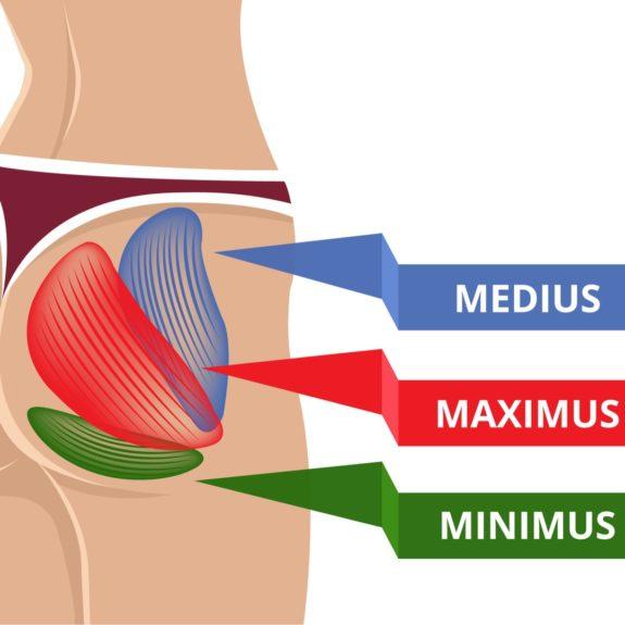 Alle drei Pomuskeln